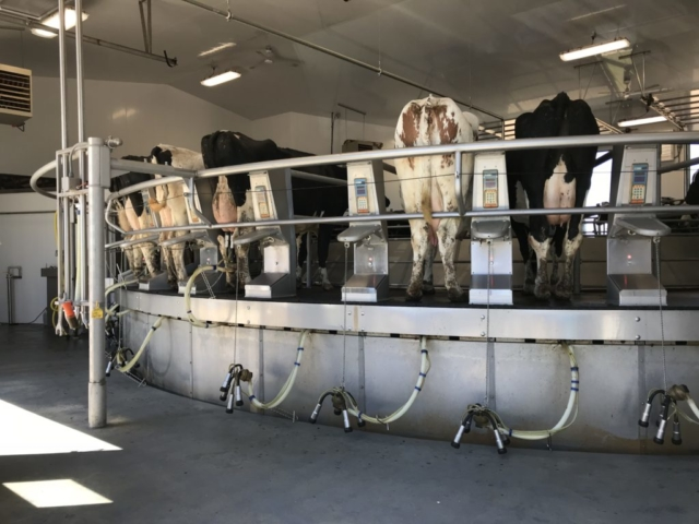 Agricultural Construction: Rotary Milking Parlor:  D&B Sternweis Farms, Inc., Marshfield, WI